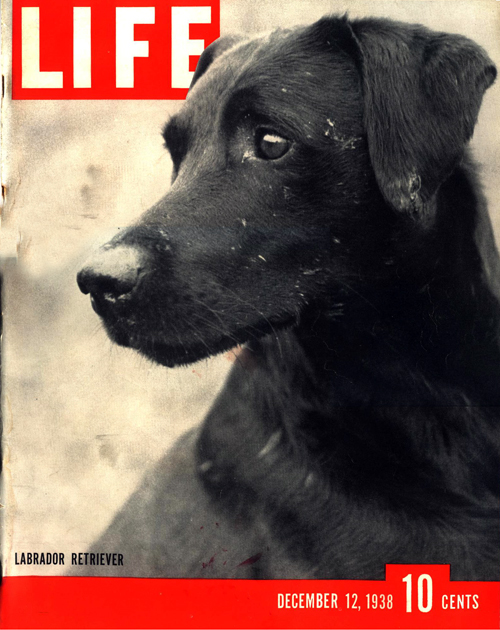 Cover of Life Magazine December 12, 1938